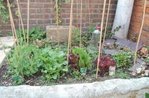 Flourishing veggie garden