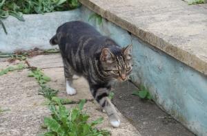 Fat Cat struts her stuff