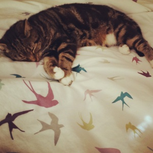 Asleep on the bed. I think she likes the bird print a bit too much.