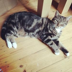 Sun puddling Fat Cat