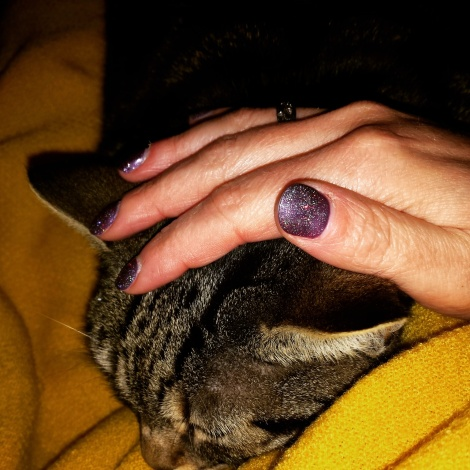 Fat Cat cuddles