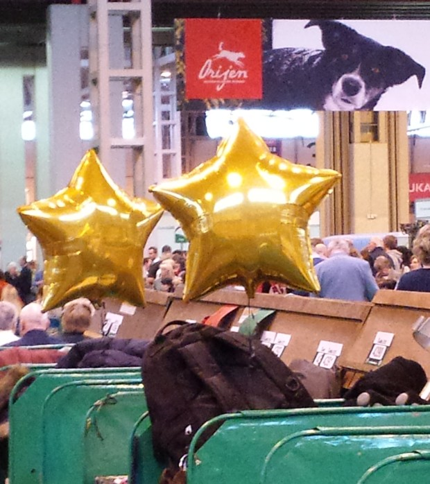 Hugo star balloons at Crufts.