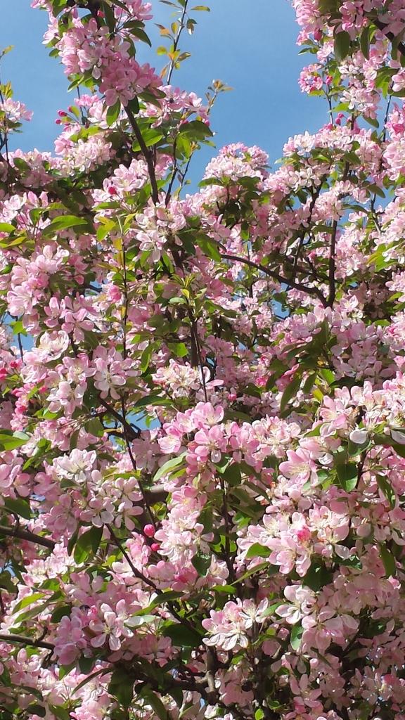 Beautiful blossom.